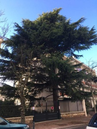 abattage arbre propriete privee